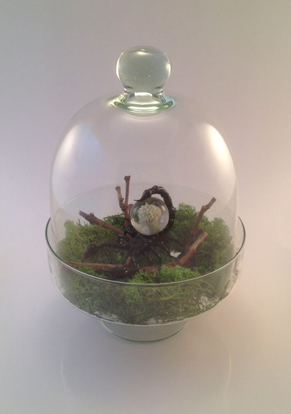 Scorpion de verre - Mad Verrerie D'Art   Frédéric Demoisson